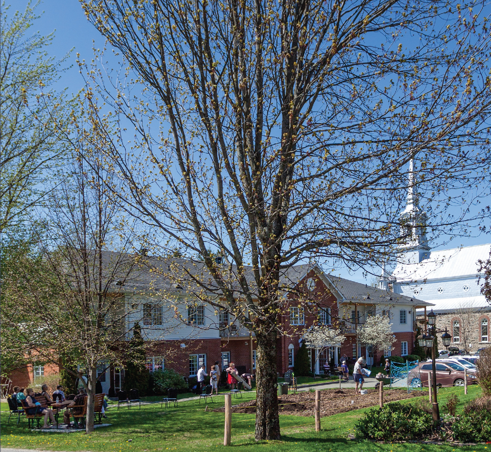 On ne transplante pas un vieil arbre… La Brunante